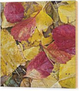Rain Leaves Wood Print