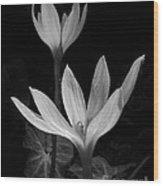 Rain Lilies Wood Print