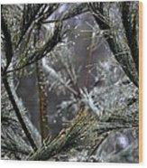 Rain On Pine Needles Wood Print