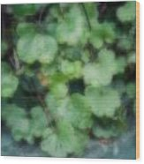 Rain On The Ivy Wood Print