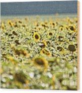 Rain On The Sunflowers Wood Print
