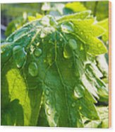 Rain Soaked Leaf Wood Print