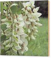 Rain-spangled Locust Flowers Wood Print