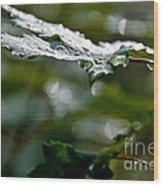 Rain Sparkles Wood Print