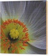 Rain Sprinkled White Poppy Wood Print
