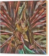 Rainbow Chameleon Wood Print