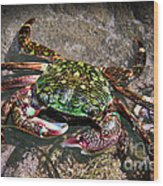 Rainbow Crab Wood Print