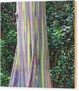 Rainbow Eucalyptus 3 Wood Print