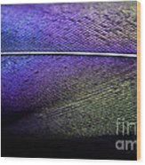 Rainbow Feather Wood Print