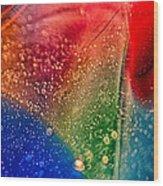 Rainbow Fishtail Wood Print