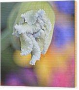 Rainbow Iris Wood Print
