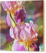 Rainbow Irises Wood Print
