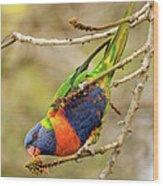 Rainbow Lorikeet 02 Wood Print