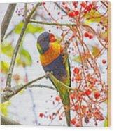 Rainbow Lorikeet In Flame Tree Wood Print