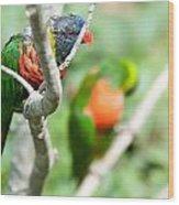 Rainbow Lorikeet Parrot Trichoglossus Haematodus Wood Print