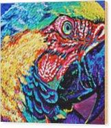 Rainbow Macaw Wood Print