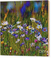 Rainbow Meadow Wood Print