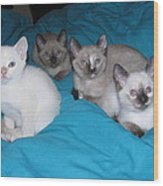 Rainbow Of Kittens Wood Print