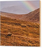Rainbow Over Grizzly In Denali Wood Print