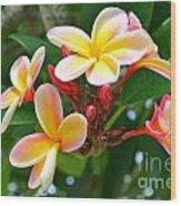 Rainbow Plumeria - No 4 Wood Print