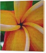 Rainbow Plumeria Wood Print