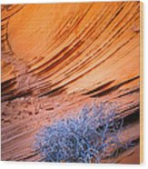 Rainbow Rocks Dead Bush #1 Wood Print