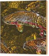 Rainbow Trout Wood Print by Cari Gesch