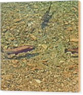Rainbow Trout Wood Print