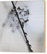 Raindrop Clinging To A Grass Culm Wood Print