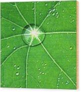 Raindrop Junction Wood Print
