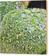Lambs Ear Raindrops Wood Print by Candice Trimble