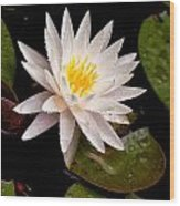 Raindrop Water Lilly Wood Print