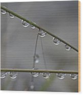 Raindrops Clinging To Grass Stems Wood Print