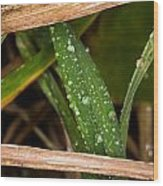 Raindrops In The Grass Wood Print