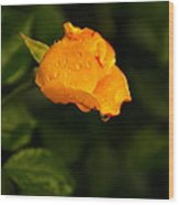 Raindrops On A Yellow Rose Wood Print