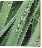Raindrops On Blades Of Grass Wood Print