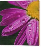 Raindrops On Daisies Wood Print