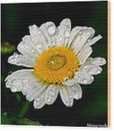 Raindrops On Daisy Wood Print