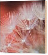 Raindrops On Dandelion Red Wood Print