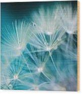 Raindrops On Dandelion Sea Blue Wood Print