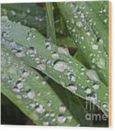 Raindrops On Daylily Leaves Wood Print