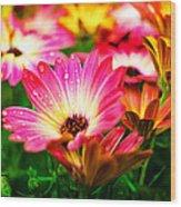Raindrops On Flower Wood Print