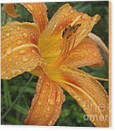 Raindrops On Golden Lily Wood Print