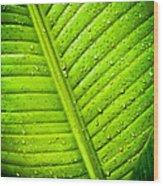 Raindrops On Green Leaf Wood Print