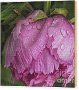 Raindrops On Peony Wood Print