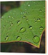 Raindrops On Plumeria Leaf Wood Print