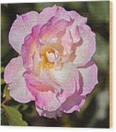 Raindrops On Rose Petals Wood Print