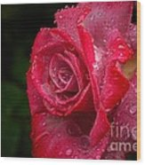Raindrops On Roses Wood Print by Peggy Hughes