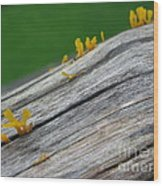 Rainforest Blooms Wood Print