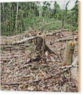 Rainforest Cleared To Plant Crop Wood Print